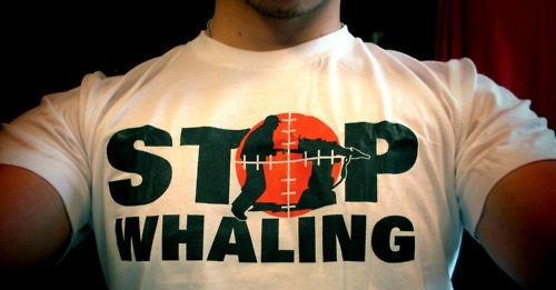 file_4629_banner-stop-whaling2