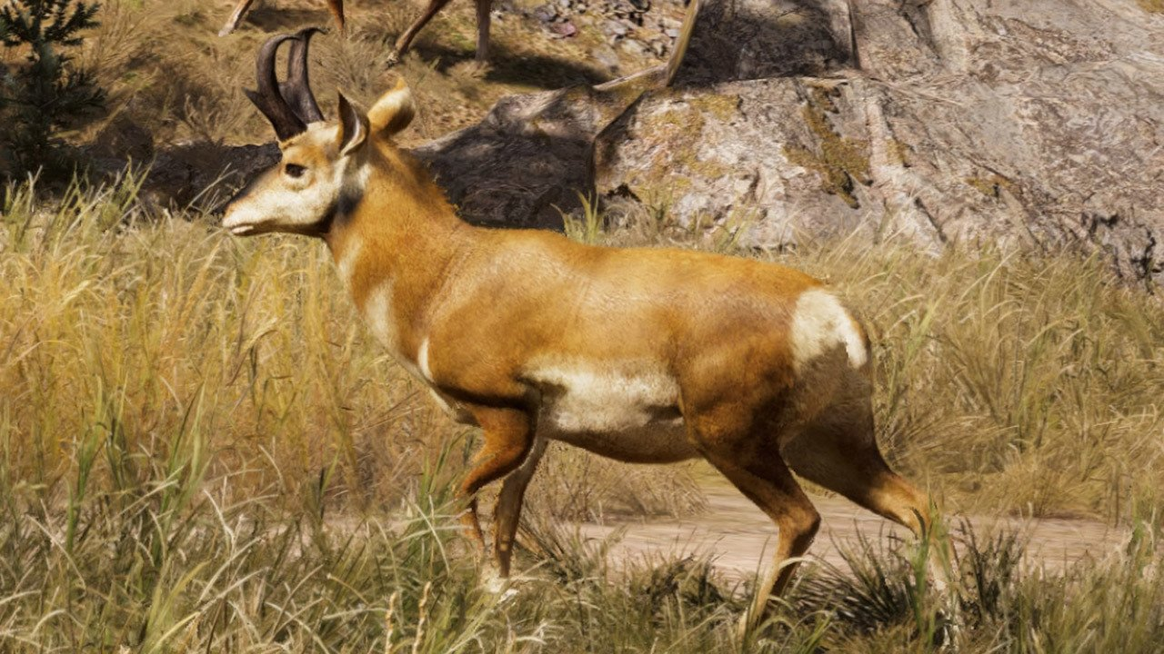 Far cry 5 pronghorn location where to hunt the pronghorn for Ps4 hunting and fishing games