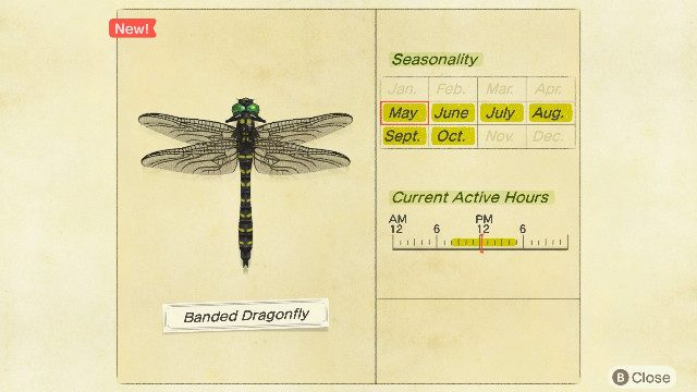 How do I catch the Banded Dragonfly in Animal Crossing: New Horizons?